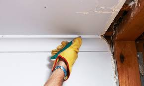 Rhino Cornice How To Remove Plasterboard Bunnings Warehouse