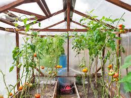 Indoor Gardening by Tips For Indoor Gardening