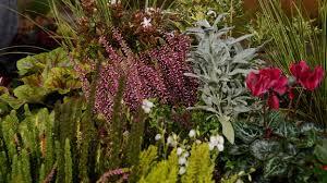 pflanzen fã r den balkon ziergarten übersicht der vorgestellten zierpflanzen a bis z