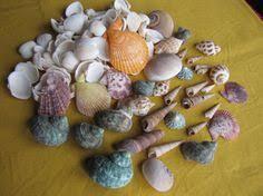 Assorted Seashells Candy Snail Seashells 15 Seashell Supply Craft By Livecoastal