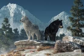 white wolf black wolf by deskridge on deviantart