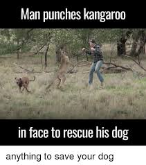 Kangaroo Meme - 25 best memes about man punches kangaroo man punches