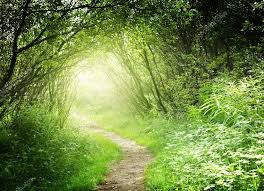 Deep Forest Green Way In Deep Forest U2014 Stock Photo Iakov 4621634