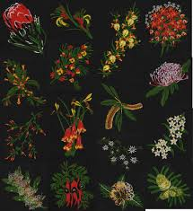 australian native plants pictures australian native plants out a18 25 00 outbackembroidery