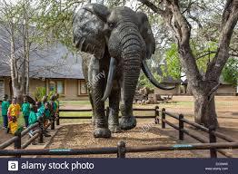 elephant statue stock photos u0026 elephant statue stock images alamy