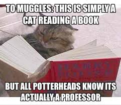 To Meme - 125 of the best harry potter memes movies galleries paste