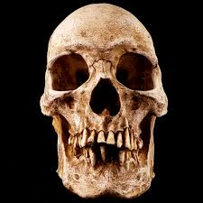 skulls museum skull shoppe com seattle wa