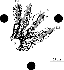 switching destinations memory change in wood ants journal of
