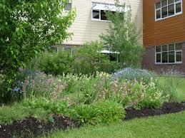 northwest native plants native plant gardens flathead audubon society