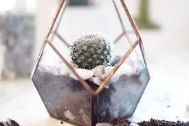 a cute diy cactus glass terrarium u2013 a snippet of life