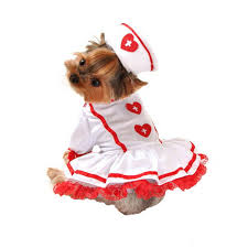 Halloween Costumes Yorkies Staff Picks Pet Halloween Costumes Baxterboo