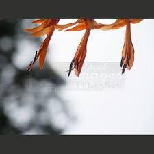 imagenes libres para publicidad mejores 35 imágenes de imagenes para publicidad en pinterest