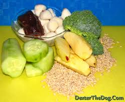 home made healthy dog food and pet nutrition natural pet care
