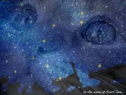 cat universe wallpaper my top collection warrior cats wallpaper