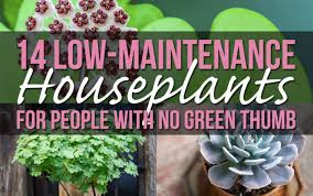 14 houseplants for people with no green thumb