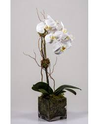 Orchid Plant Nyc Orchids Plants By Starbright Voted Nyc U0027s Best Florist
