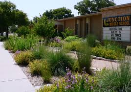 texas native plants landscaping spotlight archive hill country chapter