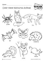 17 best forest creatures images on pinterest fall and