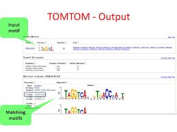 Meme Motif - tutorial 5 motif discovery ppt video online download