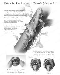Halloween Crested Gecko Morph by Reference For Metabolic Bone Disease In Geckos Herping Around