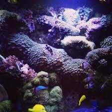 aquarium design ocean state aquatics
