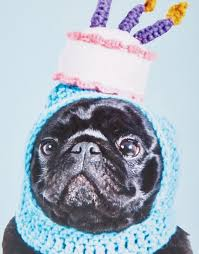 jolly awesome jolly awesome pug birthday hat card