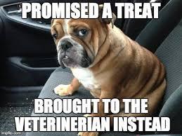 Dog At Vet Meme - best funny dog meme 2017