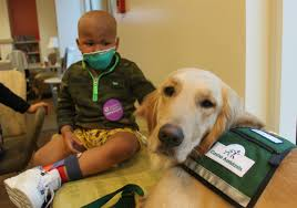 Comfort Golden See Two Support Dogs Bring Comfort Happiness To Children In A