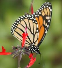 a butterfly coming out of cocoon my pictures
