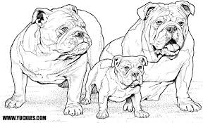 bulldog coloring page by yuckles