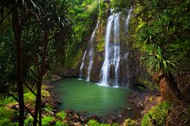 Hawaii forest images Forests waterfalls afeinberg photography jpg