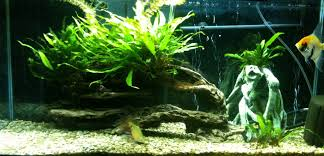 10 gallon planted tank led lighting aquarium lighting information guide reef planted par pur pas