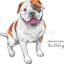 vector sketch dog english bulldog breed stock vector colourbox