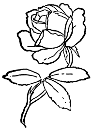 coloring roses coloring pages decoration free coloring