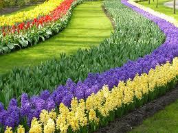 photos the world u0027s largest flower garden garden variety