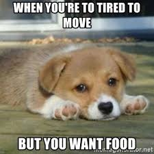 Tired Meme Face - when you re to tired to move but you want food sad puppy face