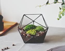 geometric terrarium container minimalist planter christmas