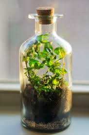 terrarium containers from recycled glass with with bottles and