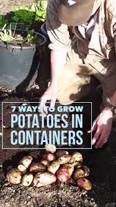116 best container gardening images on pinterest garden ideas