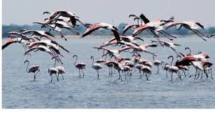 weekend getaways destinations from chennai pulicat lake distance