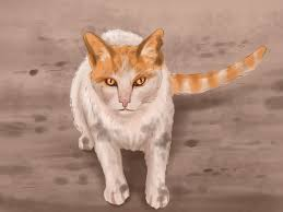 how to identify cats 11 steps with pictures wikihow