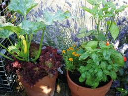 Vegetables For Container Gardening by Growing Vegetables In Containers Diy