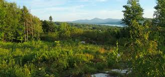 Vermont forest images Northern vermont real estate vermont land for sale farm forest jpg