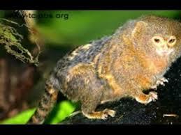 Tropical Rainforest Plant Species List - animals and plants in tropical rainforest youtube