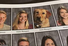 high school yearbooks service dog gets photo in utah high school yearbook daily mail