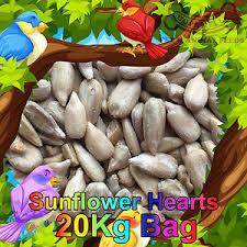 sunflower hearts for birds ebay