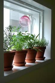 Kitchen Window Sill Ideas Window Herb Garden For Kitchen Diy To Build Window Herb Garden