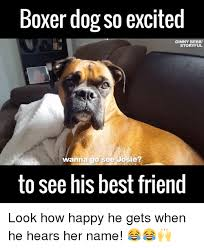 Funny Boxer Dog Memes - 25 best memes about boxer dogs boxer dogs memes