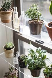 plant stand window ledge plant shelf kitchen herb gardens herbs