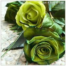 Lime Green Flowers - 19 best roses green images on pinterest green rose green